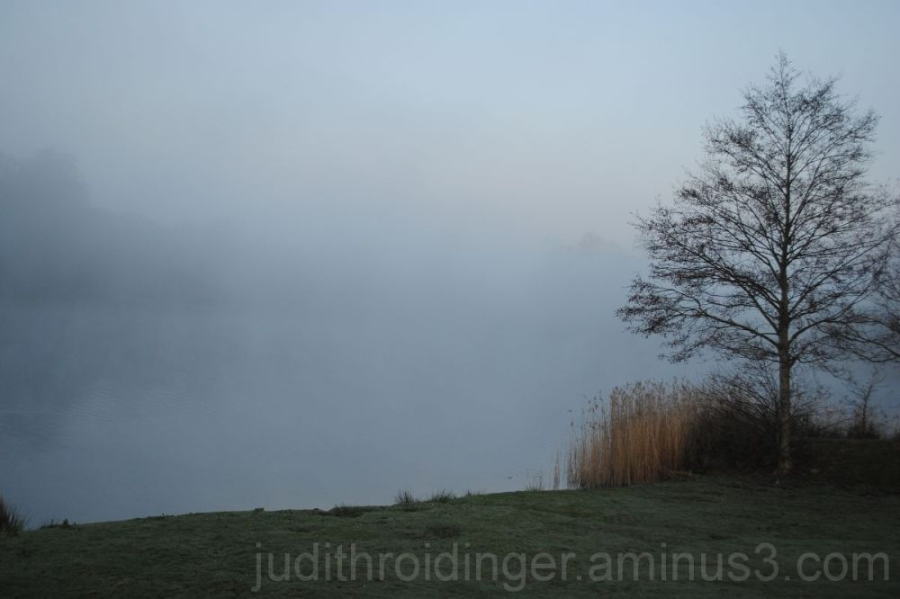 a lake hidden by the fog, a tree in the foreground