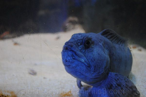 fish starring