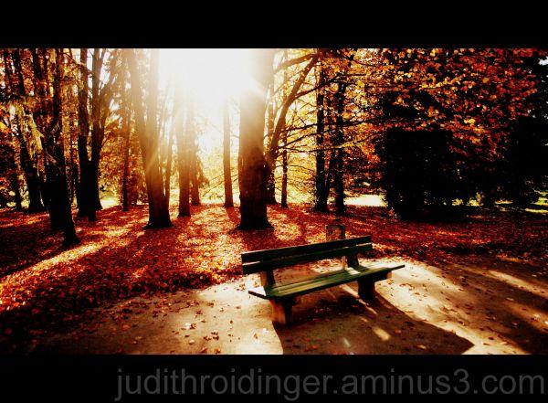 autumn spot