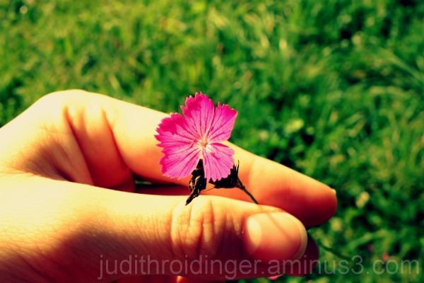 A hand with a pink flower