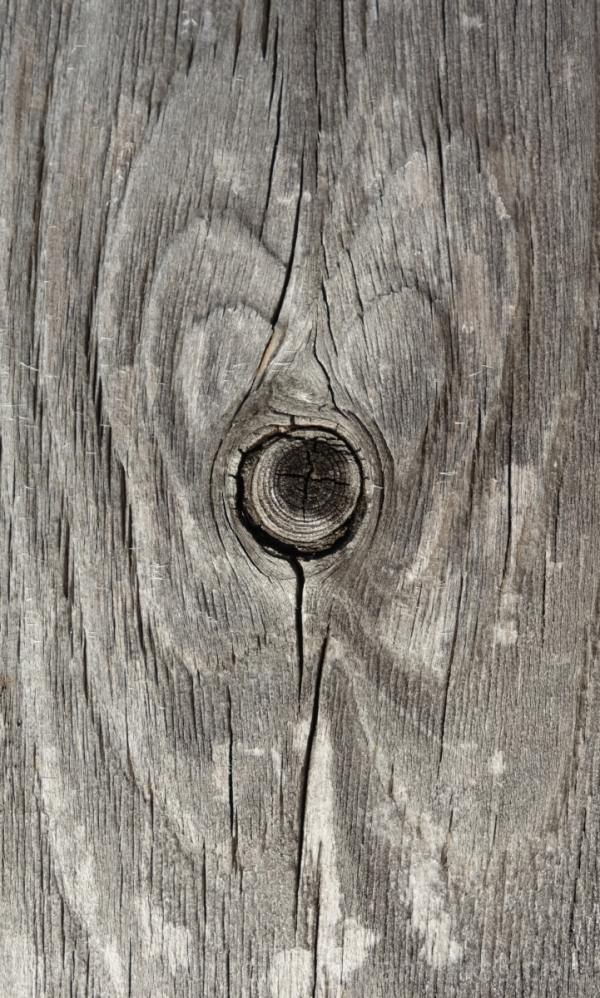 a heart in wood