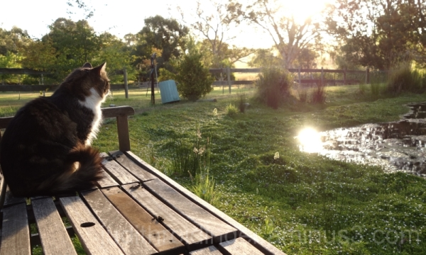 cat at a pond