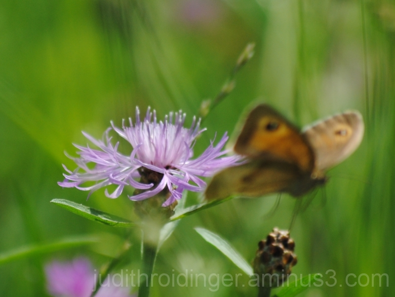 Butterfly flying away from a flower