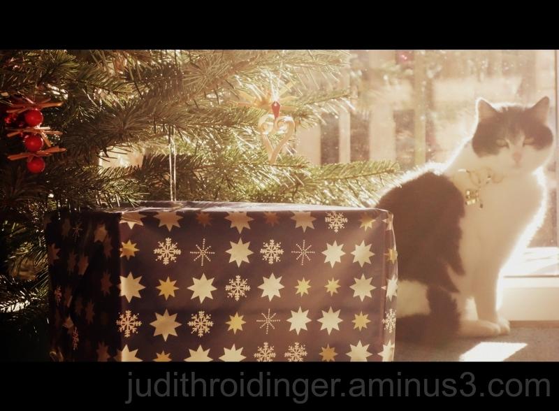 Weihnachten mit Tannenbaum, Geschenken, Katze
