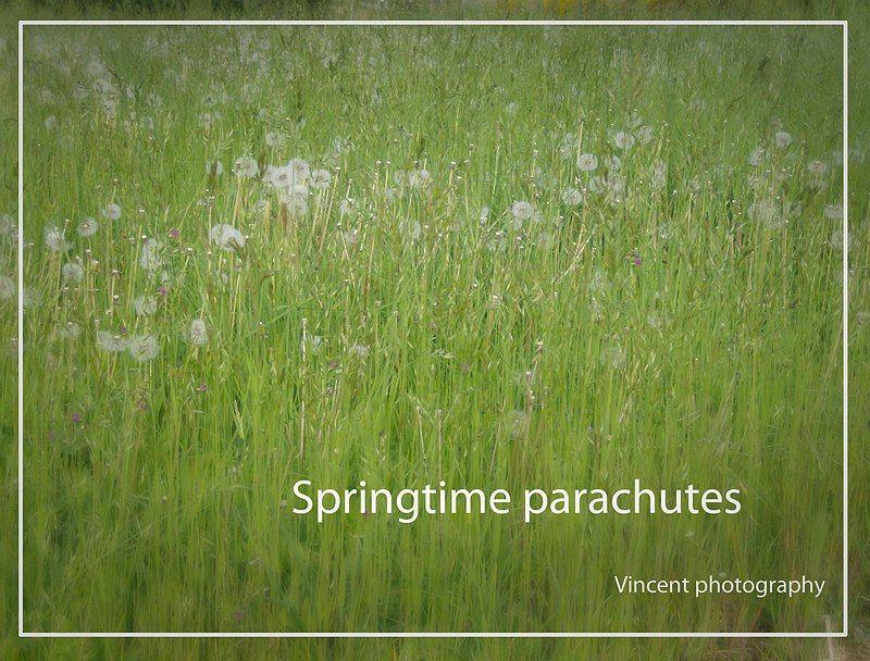 groen gras met de kleine parachutes