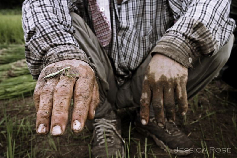 A rice farmer showcases a bright praying mantis