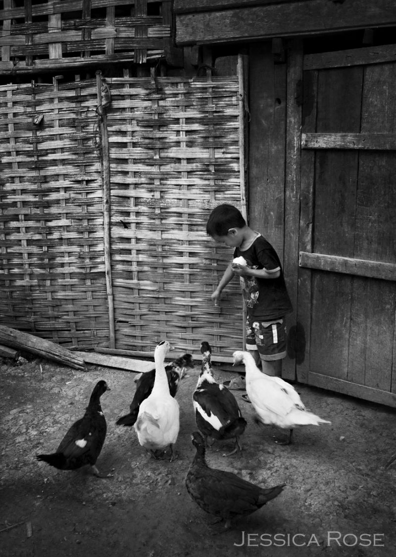 Feeding the family geese