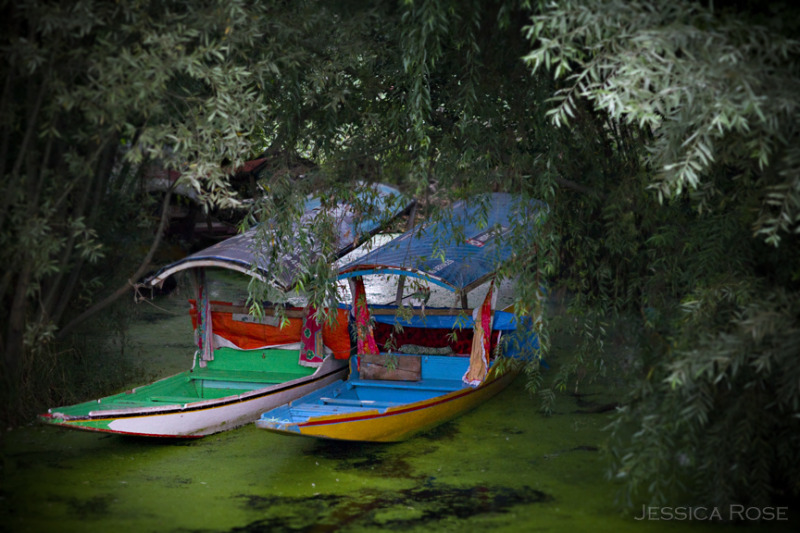 Boats at rest on Dal Lake in Srinagar, Kashmir