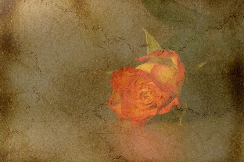 Rose rematch