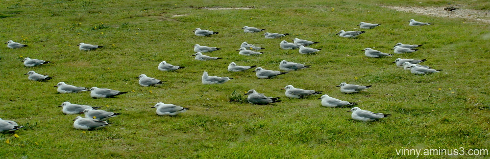 Summerstrand Seagulls