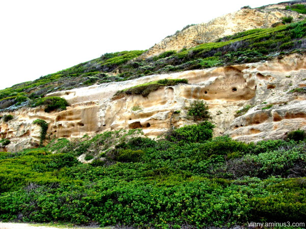 Nahoon Formation with coastal fynbos