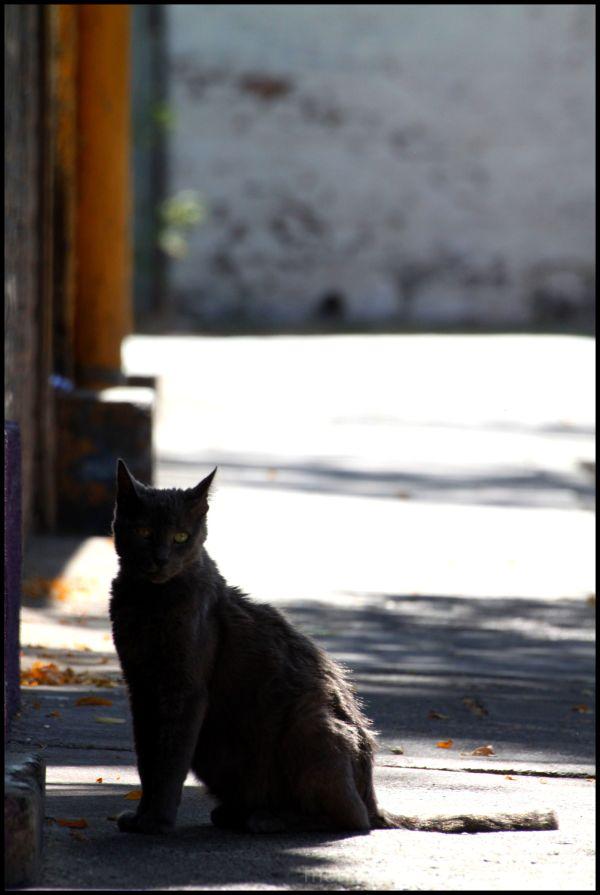 Santiago´s Cat