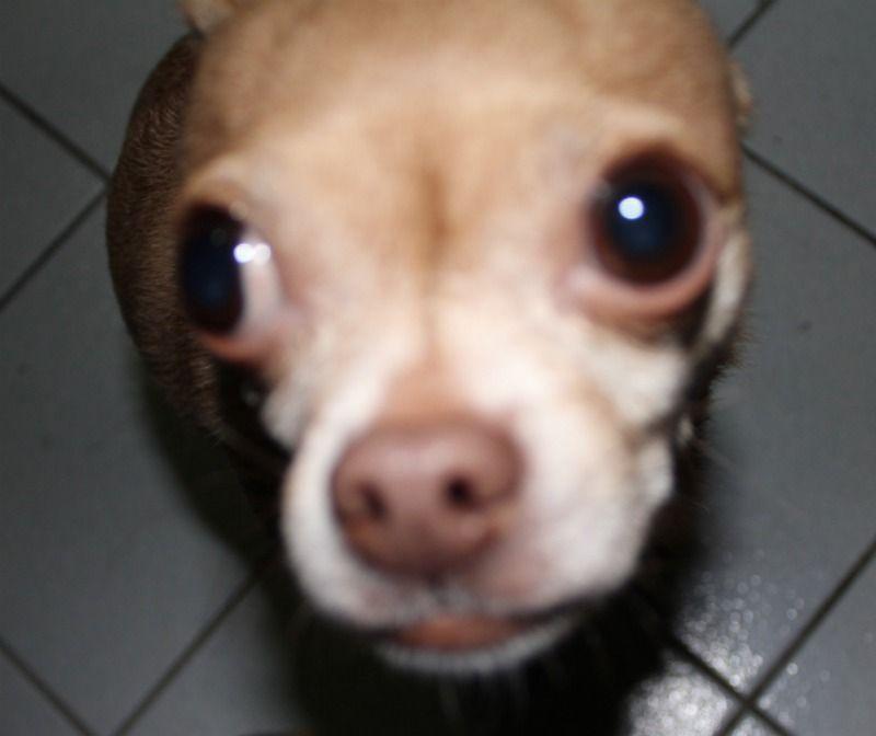 dog with bigger head