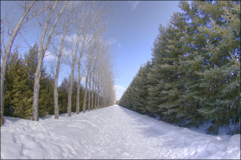 a road lined with dead and live trees