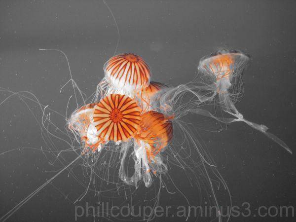 Jellyfish @ Vancouver Aquarium