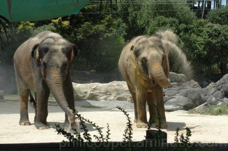 Kashin @ the Zoo