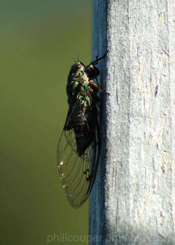 Cicadas deck warm