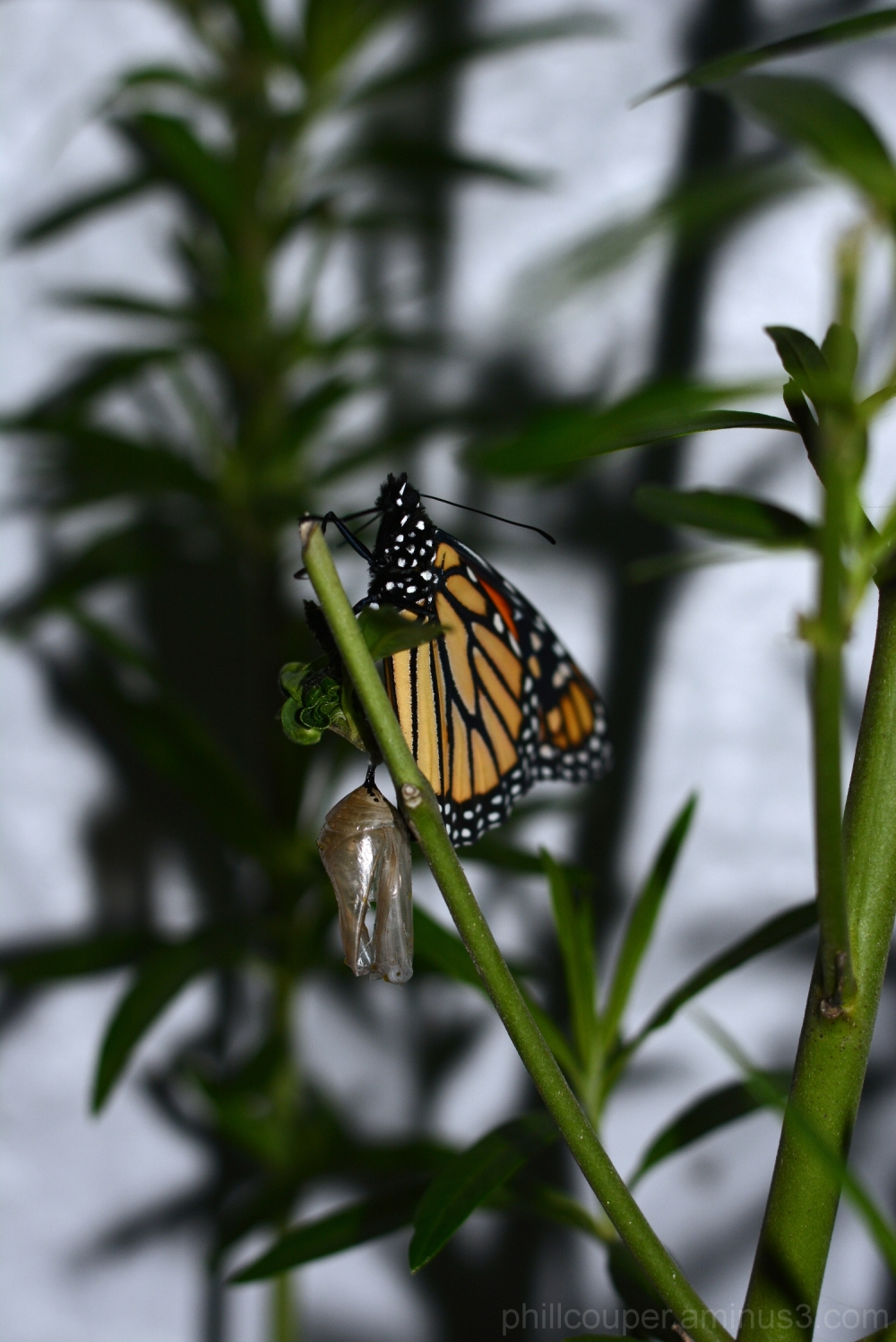 New Butterfly sunning its wings before leaving