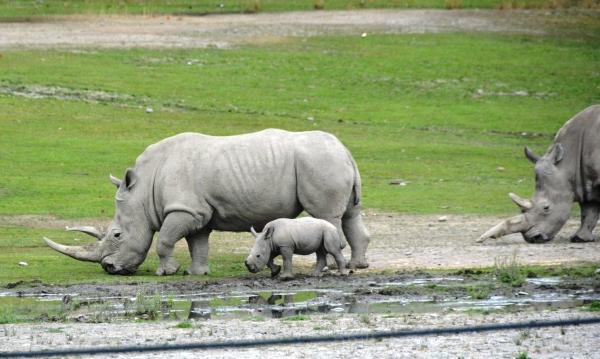 Baby Rhino @ Orana Park