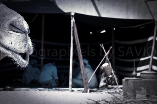 Arabic,camel,tent, Bedouin,Dubai,Bastakiya