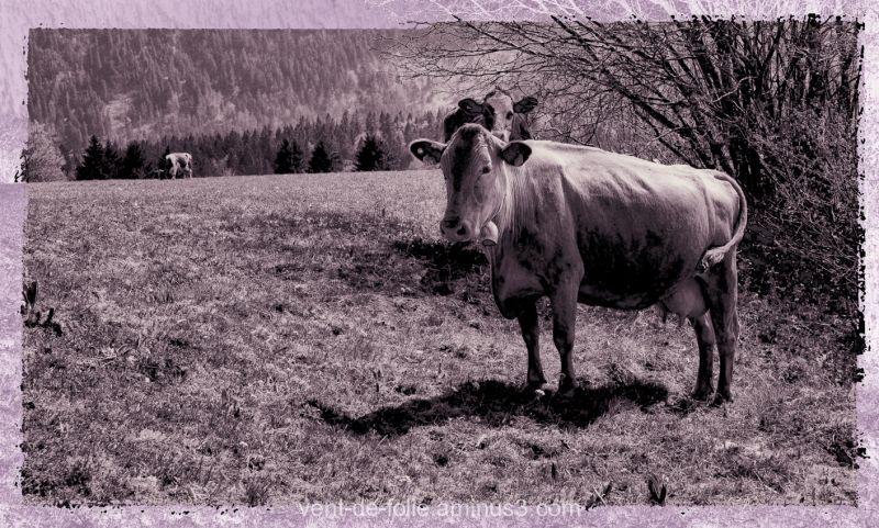 Info EolJorat : posez donc des questions vaches!