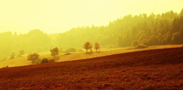The Golden morning
