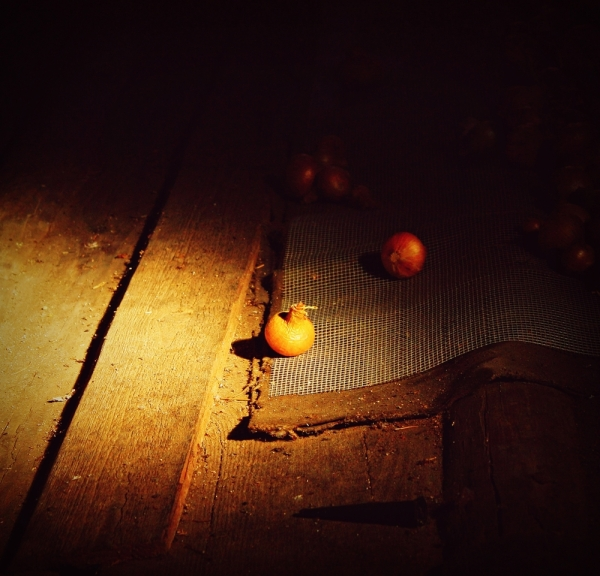 Onions in the attic