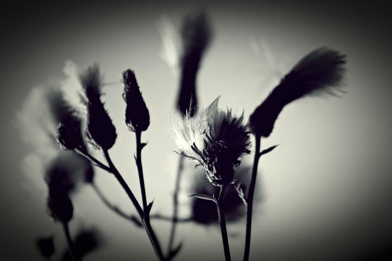 grass, black & white