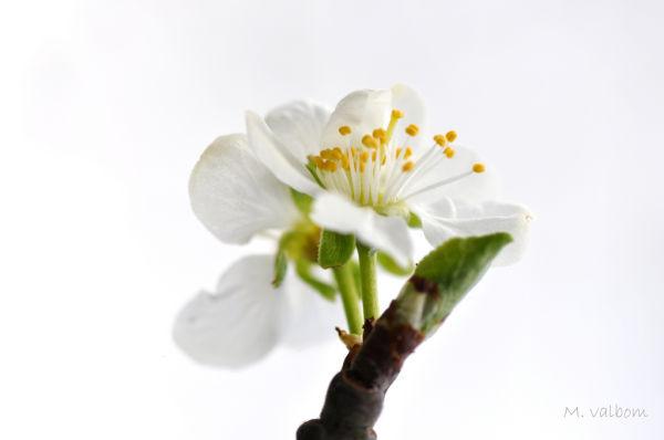 Flower Fruit