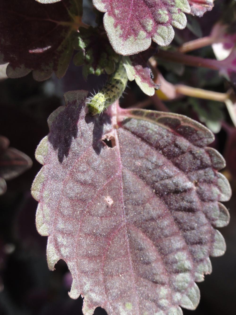 Worm eating a leaf