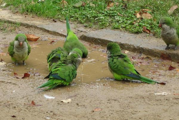 Bain de boue.