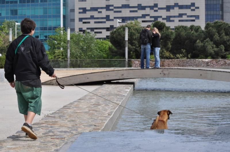 Une vie de chien .