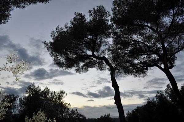 Trees .