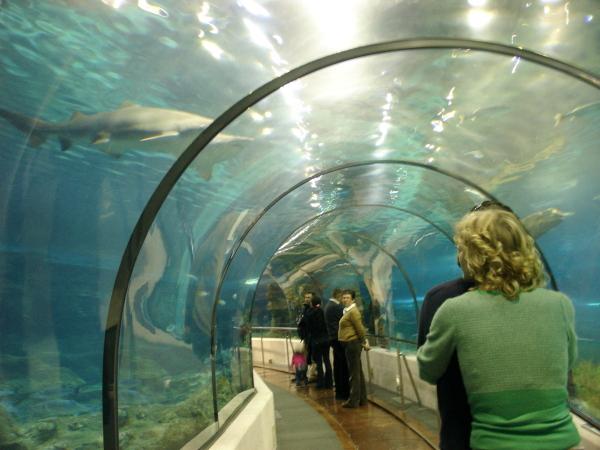 Dans l'aquarium .