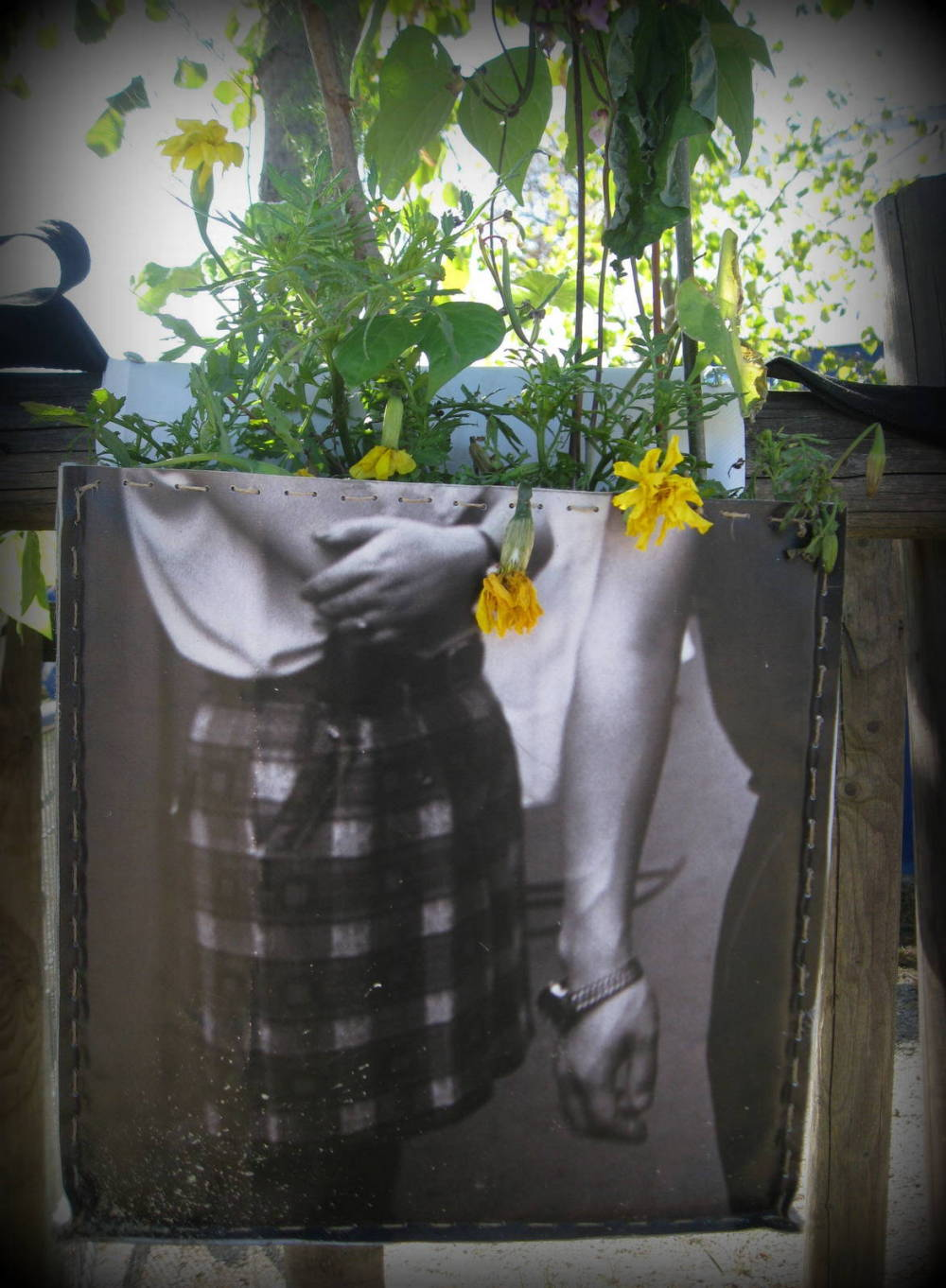 yellow flowers .
