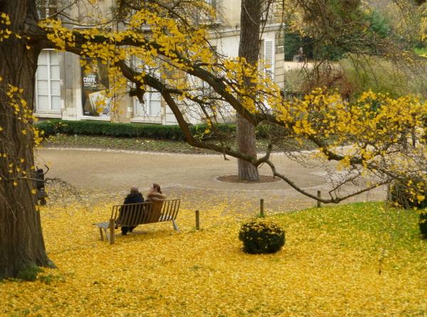 Balade d'automne au jardin des Plantes . 1
