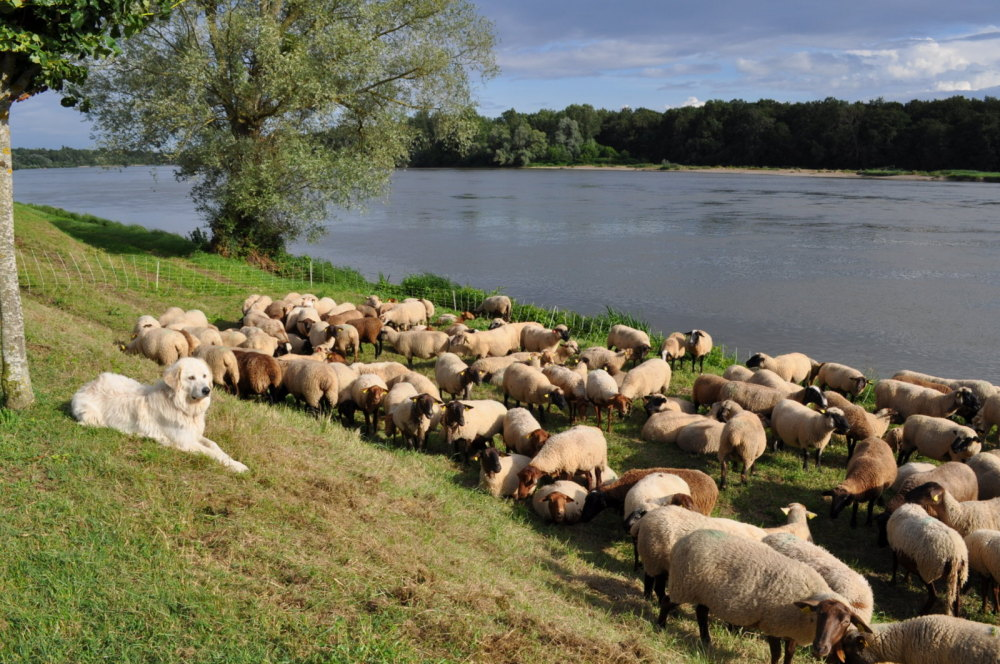 Bords de Loire  .