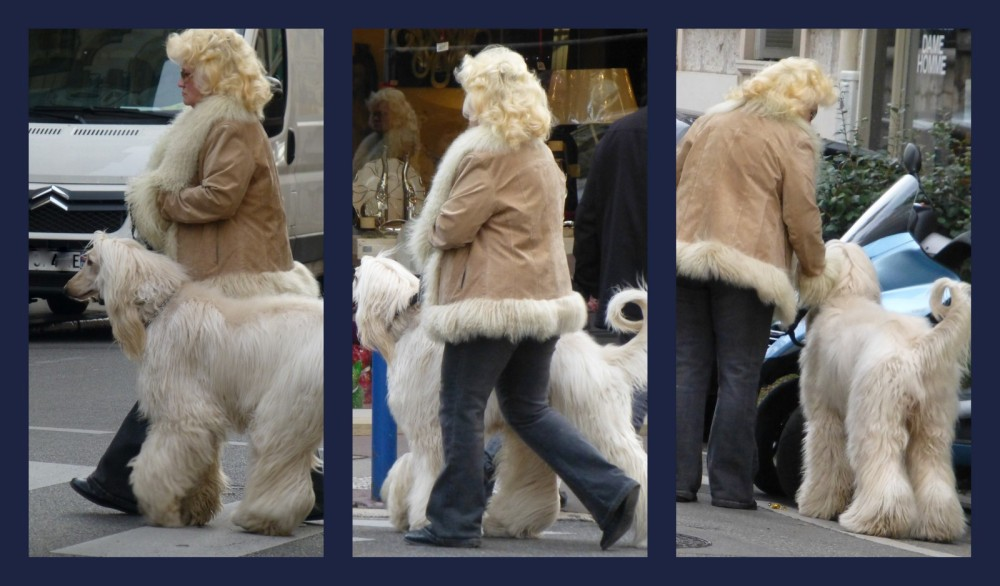Tel chien tel manteau ......