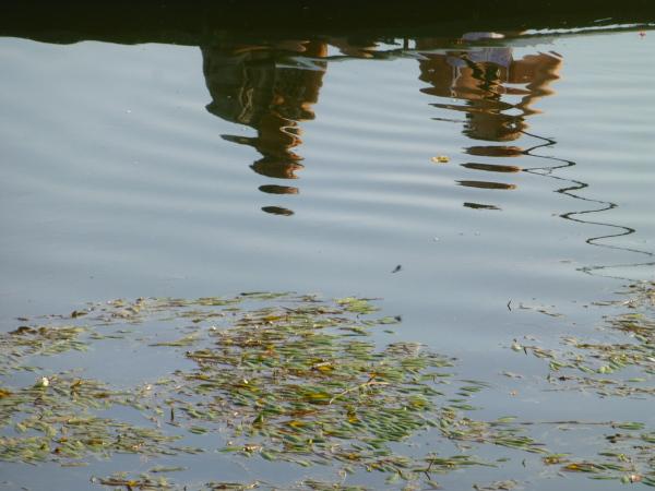 Reflets en Loire .