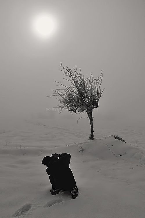 some subjects in Fog