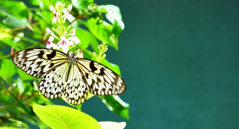 The butterfly that caught my heart