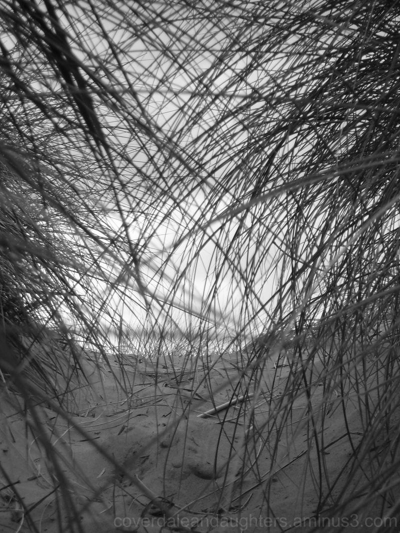 sea through the grass
