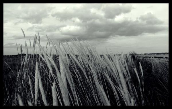 Piegati al vento