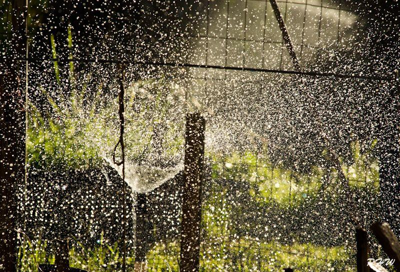 Garden Sprinkler #1