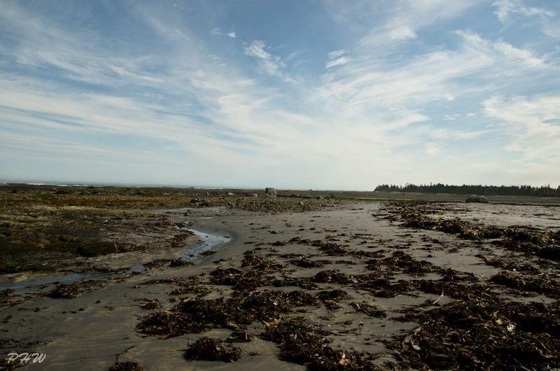 Low Tide #2