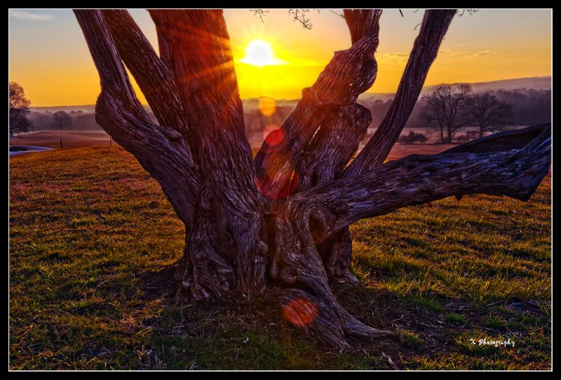 sunrise in valley forge (3)