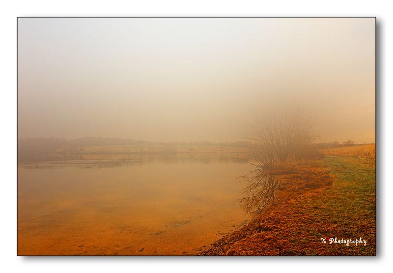 Foggy Morning 1