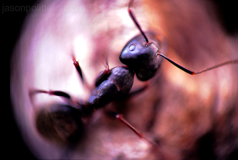 Macro of an ant's world.