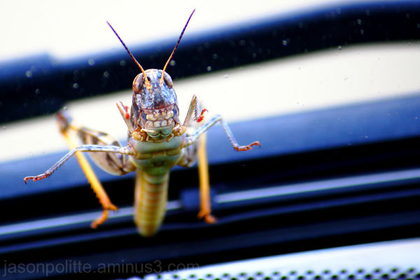 Grasshopper smiling through the car windshield