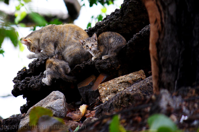 Stray cat with kittens on the Arkansas River banks